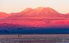 Caminando en el salar | Walking on the saltflats (josefrancisco.salgado) Tags: 70200mmf28gvrii atacamadesert chile d810a desiertodeatacama iiregióndeantofagasta nikkor nikon provinciadeelloa reservanacionallosflamencos atardecer ave bird desert desierto fauna flamenco flamingo montaña mountain ocaso puestadelsol pájaro saltflats sunset cl