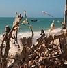 Beach Canoeing (Eyes Open To Life) Tags: ocean water canoe driftwood sand nature seascape blue seashells