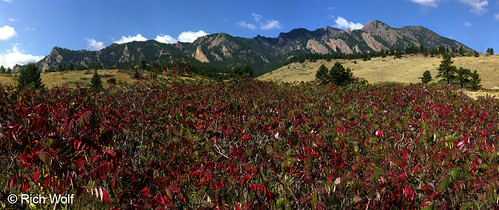 Photo - Sumac fall colors - South Mesa trail, City of Boulder Open Space and Mountain Parks