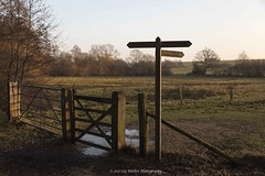 17/365 (Liz Barber) Tags: bridleway gate fencing trees field puddle signpost