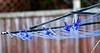 """HANGING AROUND"", ACA PHOTO (alexanderrmarkovic) Tags: clothesline clothespins clotheshanger acaphoto"