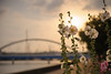 20150611-DS7_2846.jpg (d3_plus) Tags: street bridge sunset sky plant flower building nature bicycle japan river cycling spring nikon scenery nightshot bokeh outdoor dusk daily architectural rainy ragnarok bloom 夕陽 日本 streetphoto nightview 花 tamron 自然 夜景 夕日 空 散歩 dailyphoto 風景 植物 逆光 thesedays pottering 自転車 夕焼け 春 建築物 againstthelight againstthesun 景色 神奈川県 サイクリング 川 日常 路上 tamronspaf2875mmf28 2875 ボケ ストリート 2875mmf28 ニコン tamronspaf2875mmf28xrdildasphericalif ポタリング tamronspaf2875mmf28xrdild architecturalstructure d700 kanagawapref 屋外 nikond700 路上写真 nikonfxshowcase