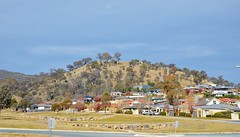 Roy Roy Hill, southern Canberra (AndyBrii) Tags: kangaroo canberra act banks conder