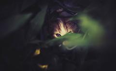 znowukoty (Dawid Lorenc) Tags: animal cat canon 50mm kit stm 18 koty kot busz zwierzeta 600d