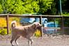 _DSC2988.jpg (orig_lowolf) Tags: usa dog oregon nikon flickr dogpark lakeoswego d300s sigmaaf150500mmf563apodgoshsm