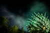 abstract fireworks 5 (pbo31) Tags: california summer abstract black color green night america nikon focus display fireworks fair bayarea eastbay 4thofjuly independenceday pleasanton alamedacounty alamedacountyfair blooming d800 pyrotechnics 2015 boury pbo31 oaklandeastbaysymphony