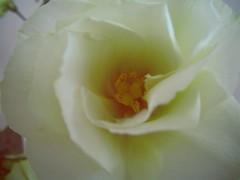 . (mashkagav) Tags: flowers summer2012