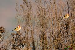 A-LUR_5696 (ornessina) Tags: trasimeno umbria byrd uccelli aironi cormorani toscana va orcia