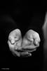 Hands-3.jpg (Peter Baele) Tags: photography blackandwhite monochrome portfolio hands dark art