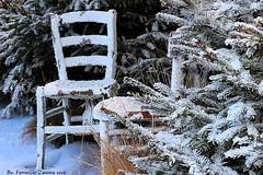 """Aspettando la neve (Ferruccio Zanone) Tags: neve sci """"floricoltura donetti"""" inverno pinete sedia aspettare"""