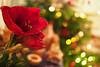 Christmas Bokeh (Elenovela) Tags: amaryllis blume flower schärfentiefe depthoffield bokeh christmas weihnachten christmaslights weihnachtslichter christmasdecoration weihnachtsdekoration availablelight olympusomdem1markii olympus25mmf12 elenovela karstenmüller