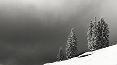 Winter in s/w (lomix-logo) Tags: winter österreich tirol schnee sw cool kalt snow ice eis