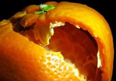 "Macro Monday: ""It's A-Peeling To Me"" (Hayseed52) Tags: macromonday itsapeelingtome clementine halo childrens orange fruit peeling peeled"