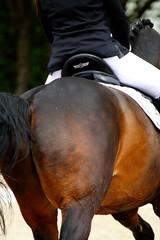 IMG_1247 (dreiwn) Tags: horse pony pferde pferd equestrian horseback reiten horseriding dressage hnger 2015 reitturnier dressur pferdekopf dressuur junioren ridingarena pferdesport doublebridle reitplatz reitverein pferdehnger kandare turnierreiten dressurprfung ldressur