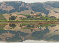 Napa-Sonoma Marshes State Wildlife Area - The Wingo Unit (barbara robeson) Tags: california reflections vineyard pond hills wingounit barbararobeson napasonomamarshesstatewildlifearea