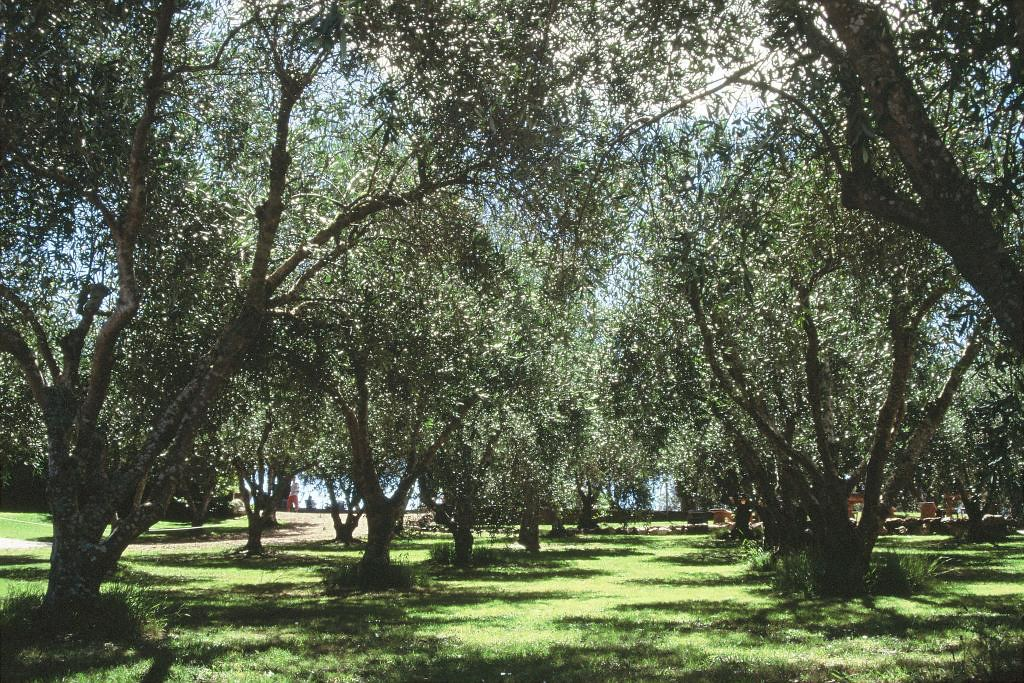 Waiheke olive garden