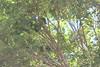 IMG_4561 (cheryl's pix) Tags: california berkeley botanicgarden botanicalgardens botanicalgarden botanicgardens berkeleyca berkeleybotanicalgarden ucbotanicalgarden universityofcaliforniabotanicalgarden universityofcaliforniabotanicalgardenatberkeley