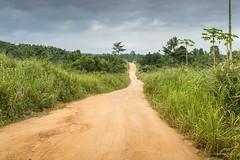 GhanaJuly2015-8827 (ImageAuto) Tags: plants green sunshine coconut palm ghana blueskies accra nsawam guymurfittphotography blueskiesghana