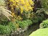 Peaceful spot (Karen Pincott) Tags: lowerhutt newzealand kowhaiinflower creek spring meandering ferns