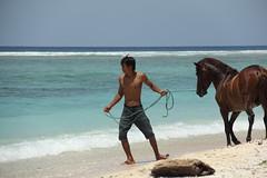 _MG_9834 (zet11) Tags: eta west nusa tenggara indonesia gilihorses beac beach boys gili