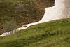 Zoom of Grizzly on Snowfield (jpmckenna - Tenquille Lake Up Next) Tags: denali denalinationalpark nps grizzlybear hiking alaska unit11 stonydome getoutside optoutside