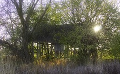 Decaying shack (steve.schlick) Tags: tree scub green sunset sun intothesun outdoor farm decay abandoned olf building