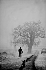 A Foggy Day in Richmond Park (Massimo Usai) Tags: 2016 architecture capital england europe fog london londonist uk winter richmondpark richmond surrey foggy december