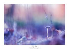 Courber l'échine (Naska Photographie) Tags: naska photographie photo photographe paysage proxy proxyphoto extérieur nature sauvage champignon mushroom forest foret bokeh color couleur purple violet