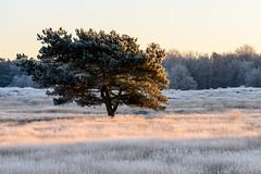 Westruper Heide im Winter (webpinsel) Tags: halternamsee kälte landschaft morgenstimmung natur sonnenaufgang sythen westruperheide winter