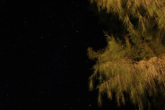 Night sky view (L. DiLallo) Tags: deathvalleynationalpark deathvalley california astrophotography nighttime nightsky stars