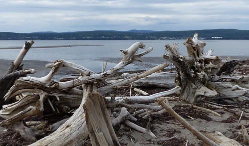 Plage de Penouille et ses bois flottés - Gaspésie - Canada
