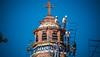 2016 - Mexico - Querétaro - Restoration (Ted's photos - For Me & You) Tags: 2016 cropped mexico queretaro santiagodequeretaro tedmcgrath tedsphotos tedsphotosmexico vignetting templodesantaclara templodesantaclaraqueretaro queretarotemplodesantaclara parroquiadelsagradocorazondejesus queretaroparroquiadelsagradocorazondejesus church churchspire cross scaffolding