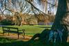 Verulamium Park St Albans (adamnsinger) Tags: st albans verulamium park flowers bouquet cathedral fuji c fujicolor 200 iso nikkormat el hertfordshire woods batchwood