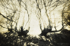 Nos vigilan (Mimadeo) Tags: scary forest fear horror mood monochrome landscape magic tree nightmare light nature mystery spooky darkness halloween woods evil creepy fantasy gothic mysterious surreal branch enchanted ghost atmosphere twisted sepia