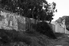 frog on the wall (pepe amestoy) Tags: blackandwhite streetphotography urbanarte elcampello spain fujifilm xe1 carl zeiss t planar 250 zm leica m mount