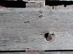 knot and nail (David Sebben) Tags: knot nail barnboard weathered barn