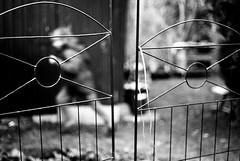 Run (Nikon FE2) (stefankamert) Tags: meinfilmlab wwwmeinfilmlabde stefankamert run bw sw baw noir noiretblanc blackandwhite blackwhite schwarzweis film analog grain dof bokeh nikon fe2 nikonfe2 nikkor kodak trix blurry