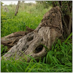 DSC08640PJ_resultat (http://phj.bookfoto.com/) Tags: botswana philippe jubeau afrique delta okavango