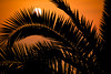 Palm tree silhouette (marcmayer) Tags: sunset sonnenuntergang silhouette palm sharp leaf palme
