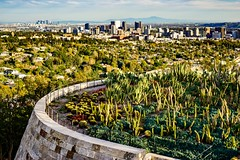 View of LA from the Getty ((Jessica)) Tags: bright museum outdoor gettycenter buildings california getty losangeles architecture la downtownla cactus goldenhour centurycity downtownlosangeles