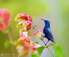 Sunbird Photography