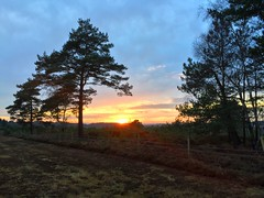 Woolmer Sunset (Marc Sayce) Tags: woolmer ranges forest conford whitehill longmoor south downs national park hampshire sunset sundown trees