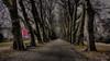 auf der Neckarinsel (eckiblues) Tags: neckarinsel tübingen platanenallee