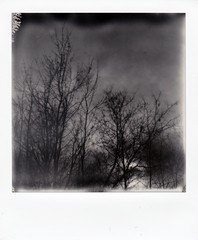 dark days (buttercup caren) Tags: polaroid impossibleproject blackandwhite darkdays ndfilter dark trees