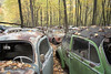 VW Graveyard (Jonnie Lynn Lace) Tags: abandoned abandonedamerica abandonedcar car vw volkswagen peelingpaint paintchips ruins modernruins derelict decay chasinglight nature tree trees color colors red green blue orange yellow leaves leaf fall autumn german american america abandonedpa pa pennsylvania white rust rusty urbex light dark sunlight daylight forest old vehicle cars nikkor nikon d750 exterior outside 24mm detail textures natur colour rural history contrast