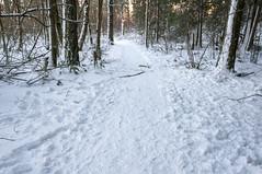 Portland Oregon Snow (Richtpt (Rich Uchytil)) Tags: 2017 oregon pdx portlandor snow tree winter portland unitedstates us