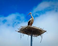 Home Sweet Home (MrBlueSky*) Tags: stork nest wildlife carvalhal alentejo portugal nature bird outdoor kingdomanimalia travel canon canonpowershot sky