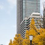 Marunouchi Building in autumn (丸の内ビルディング)