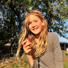 Zoe and one of her many windfall apples (miaow) Tags: bellalunaboat tasmania summer2017 apples zoe 9yo