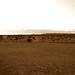 Desert panaramic